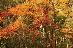 Forêt colorée d'automne Photographie stock libre de droits
