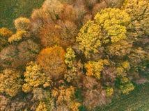 Forêt colorée d'automne de la vue d'oeil d'oiseaux photographie stock libre de droits
