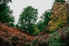 Forêt colorée en montagne d'africain Photo libre de droits