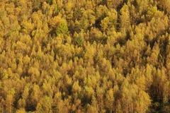 Forêt colorée et lumineuse d'automne photos stock
