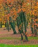 Forêt colorée par automne Photo stock