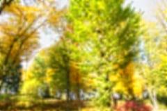 Forêt colorée par fond de tache floue, concept d'automne, l'espace de copie photo libre de droits