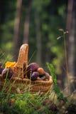 Forêt comestible de champignons de panier de chute pleine Photo libre de droits