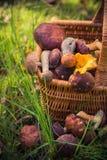 Forêt comestible de champignons de panier de chute pleine Image stock