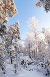 Forêt complètement de neige photographie stock
