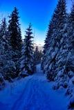 Forêt congelée à la soirée images stock