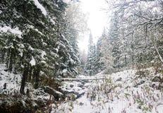 Forêt congelée Photos stock