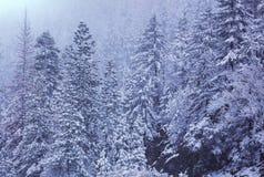 Forêt congelée photos libres de droits