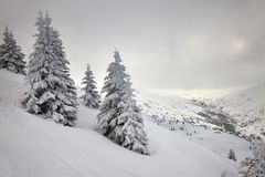Forêt congelée Image libre de droits