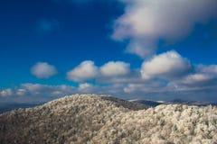 Forêt congelée Photographie stock