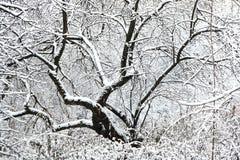 Forêt congelée Images stock
