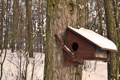 Forêt congelée Images libres de droits