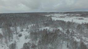 Forêt congelée banque de vidéos