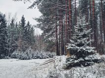 Forêt congelée Photographie stock libre de droits