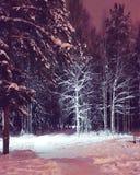 Forêt congelée photo libre de droits