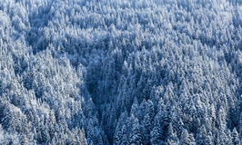 Forêt congelée - détail Photo libre de droits