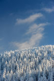 Forêt congelée dans les montagnes et le ciel bleu Images libres de droits