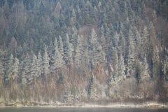 Forêt congelée en Pologne Photographie stock libre de droits