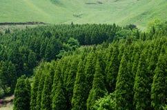 Forêt conifére Images libres de droits