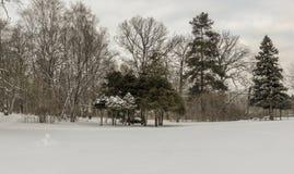 Forêt conifére d'hiver en janvier Photographie stock libre de droits