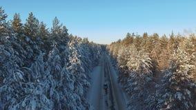 Forêt conifére d'hiver et route glissante Silhouette d'homme se recroquevillant d'affaires clips vidéos