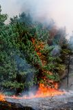 Forêt conifére en feu photos libres de droits