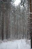 Forêt conifére en hiver Photo libre de droits