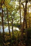 Forêt contre éclairée d'automne Photos stock