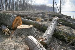 Forêt coupée image libre de droits