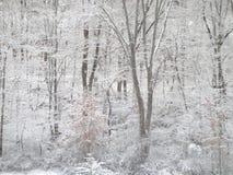 Forêt couverte de neige Photos libres de droits
