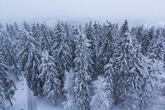 Forêt couverte de neige Images stock
