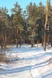 Forêt couverte de neige scénique en hiver image stock
