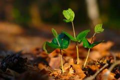 Forêt croissante de ressort Image libre de droits