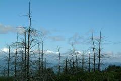 Forêt décédée Photo libre de droits
