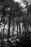 Forêt déprimée Photographie stock libre de droits