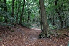 Forêt déprimée avec des feuilles image stock