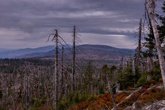 Forêt détruite en Allemagne image libre de droits