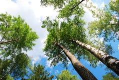 Forêt d'été Photographie stock libre de droits