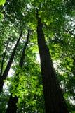 Forêt d'été Photo libre de droits
