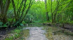 Forêt d'été avec la crique Image stock