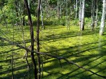 Forêt d'été dans la totalité de feuillage et de beauté Image libre de droits