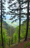 Forêt d'été et regain dense au-dessus de vallée Image libre de droits