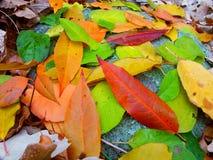 Forêt d'état de moraine de bouilloire - le Wisconsin Photos stock