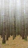 Forêt d'état de royaume Image libre de droits