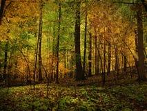 Forêt d'or Image stock