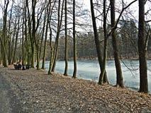 Forêt d'agiewniki de  de Å Photo libre de droits