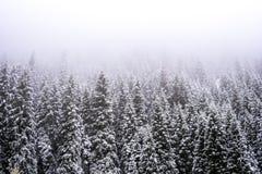 Forêt d'Ajustement-arbre de forêt d'hiver de montagnes couverte en brume de brouillard Image stock