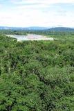 Forêt d'Amazone Photos libres de droits