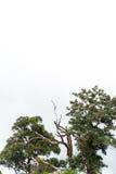 Forêt d'arbre Images stock
