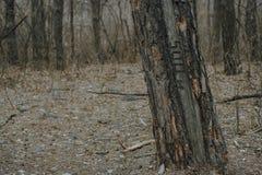 Forêt d'arbre au printemps avec l'inscription 500 Texture blur photo stock